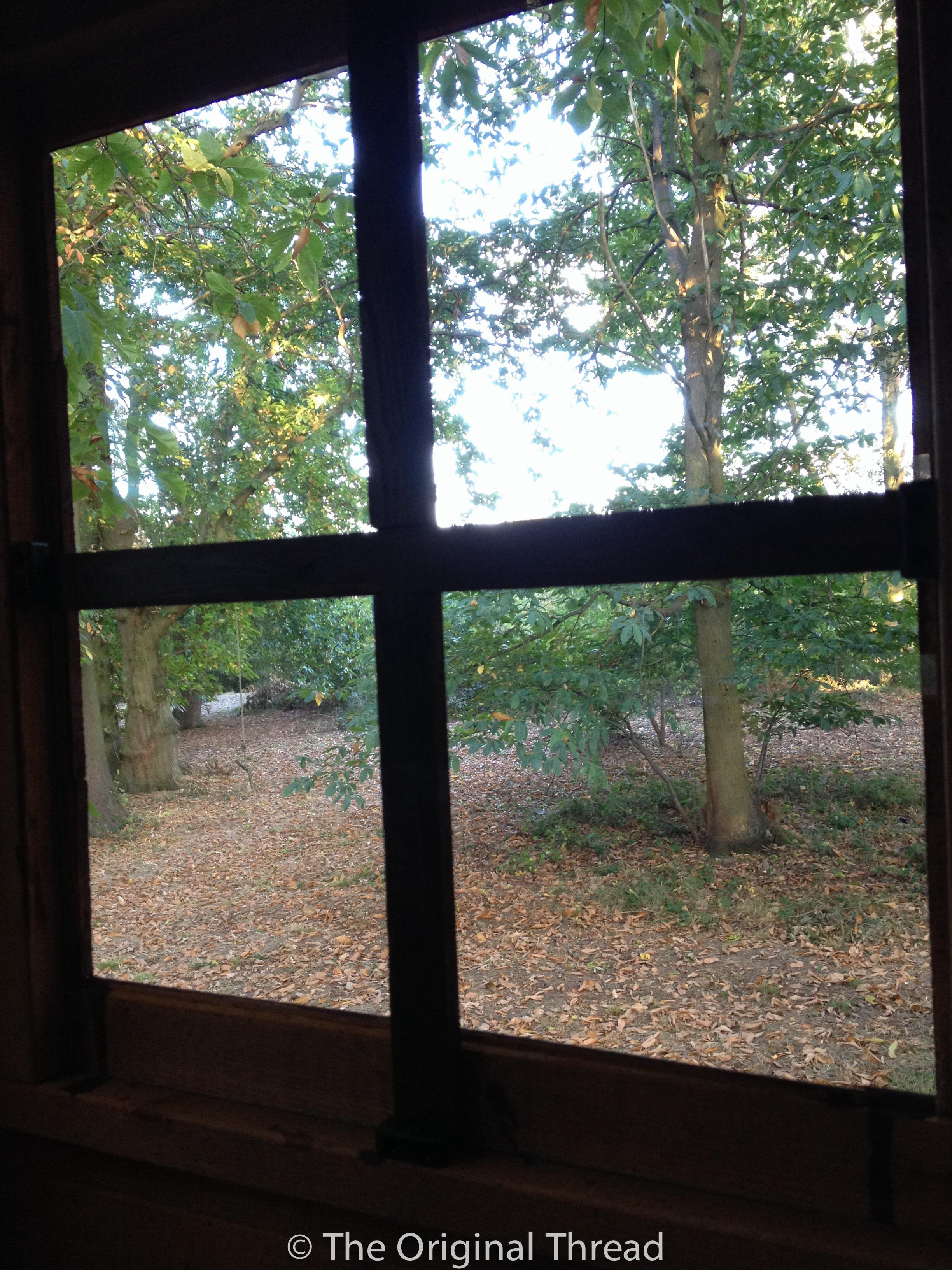 Thru the Treehouse Window