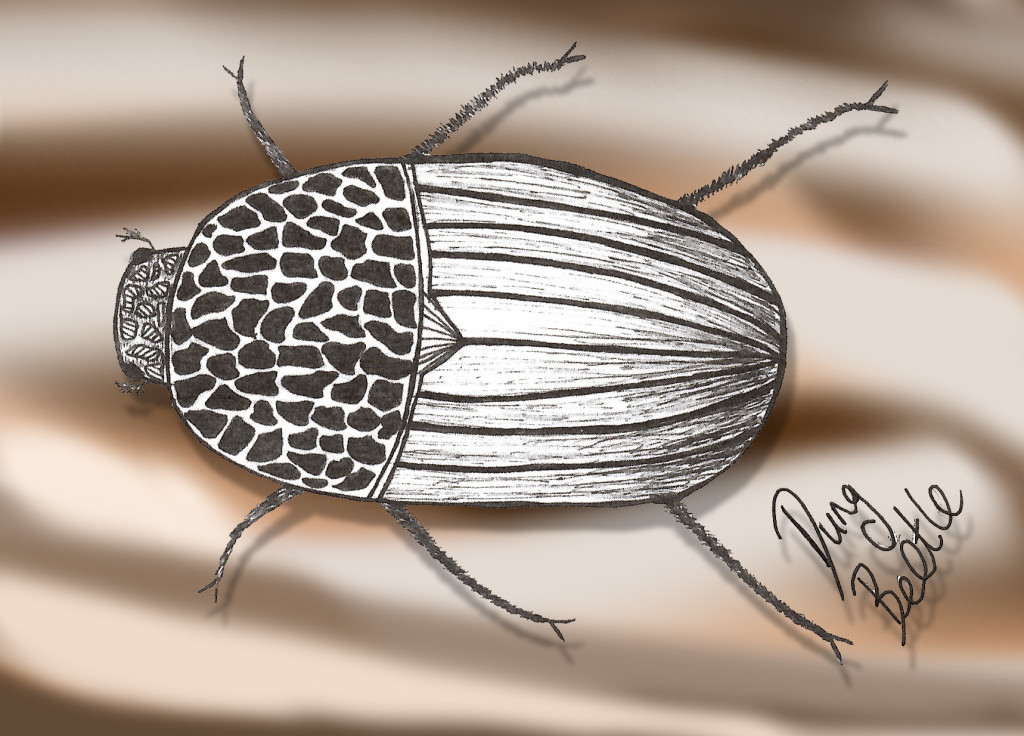 Week4_Insect_DungBeetle